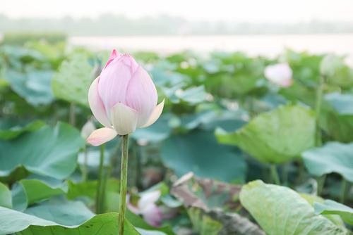 Feng Shui Serenity Inner Feng Shui